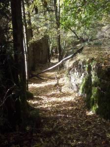 Bosque de la Pardina del Señor de Fanlo. Por Javier paza